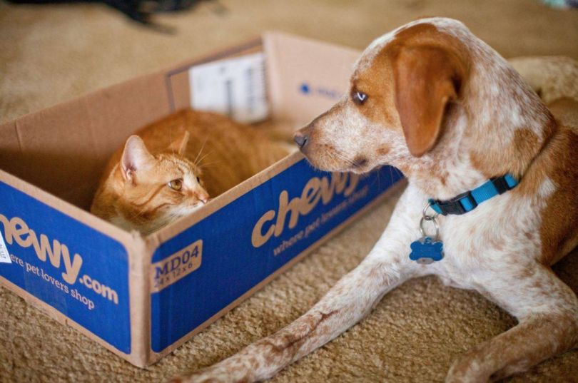 3 Boston tech companies where your pet can join the pack